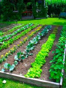 vegetable-garden-design-ideas-3